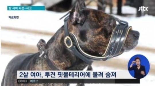 핏불테리어 / 핏불테리어 사진=JTBC 방송 캡처