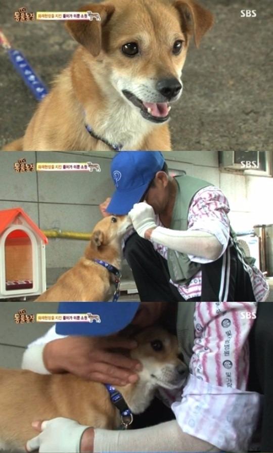 동물농장 / 동물농장 사진=sbs 방송 캡처
