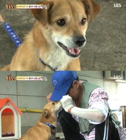 '동물농장' 똘이 / 사진=SBS 'TV 동물농장' 방송화면 캡처