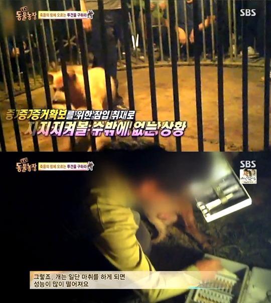 동물농장 투견 / 동물농장 투견 사진=SBS 방송 캡처