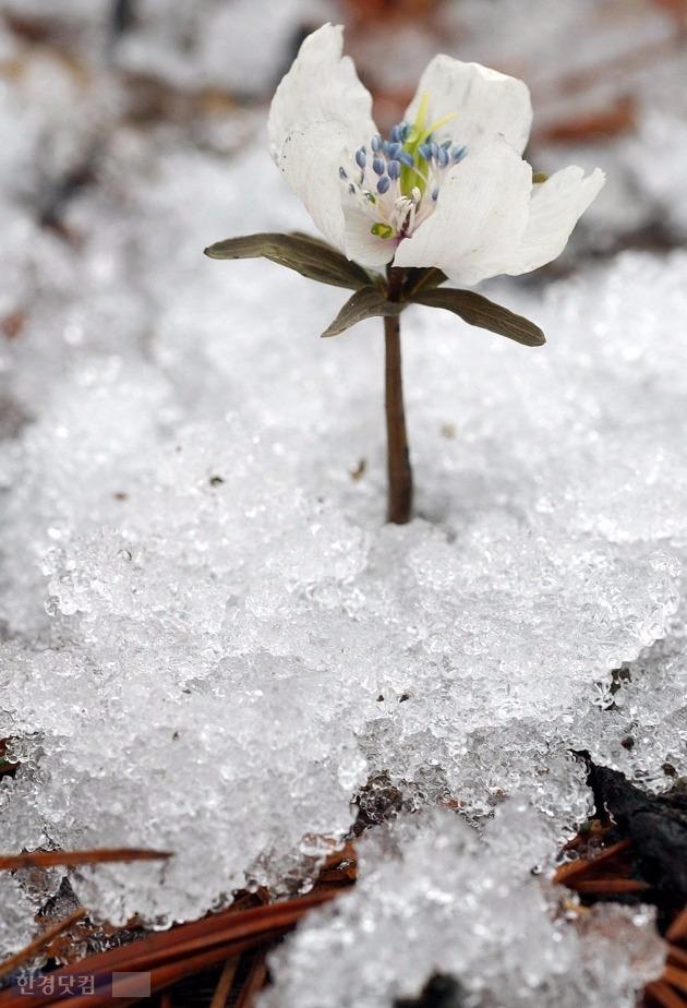 설악산 첫 얼음 설악산 첫 얼음 /한경DB