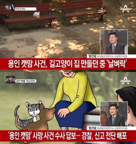 용인 캣맘 용인 캣맘 / 사진 = 채널A 방송 캡처