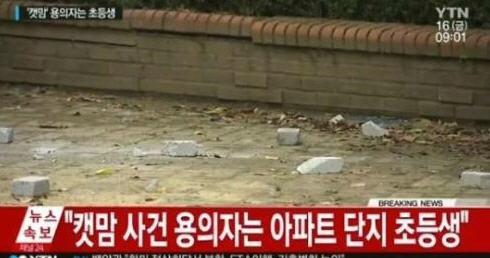 캣맘 사망사건 용의자 초등학생 /YTN