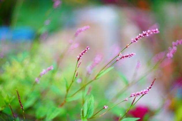 제3회 영월환경사랑사진제의 최우수상 작품인 이정구씨의 '작은 것에 많은 것이 담겨있다'.