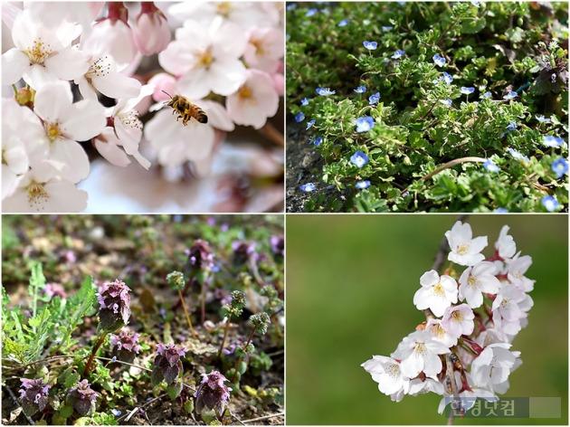 땅 위에 피어나는 아름다운 봄.