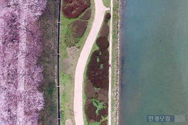 순천동천 옆 아름다운 벚꽃길.