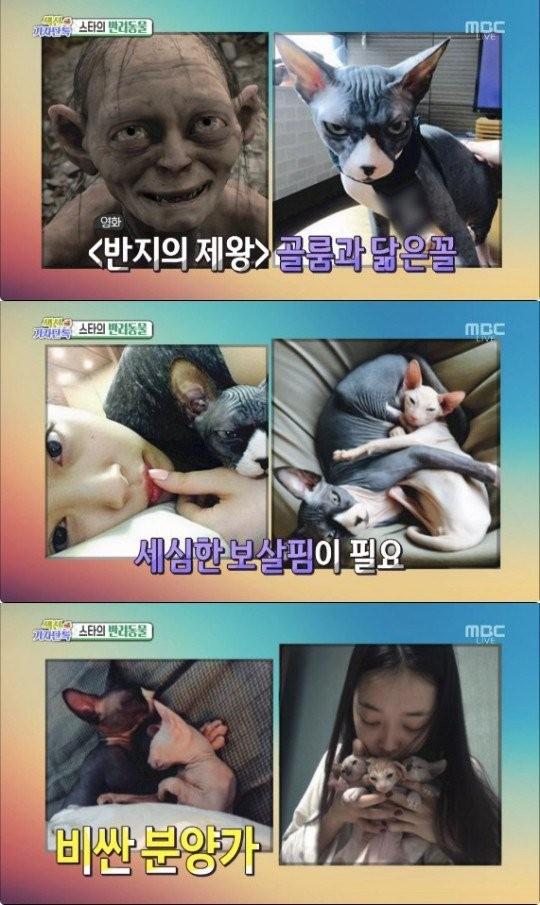 MBC 방송 캡처
