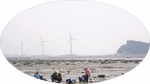 경기 안산에서 갯벌 체험을 하는 사람들. 풍력발전기와 누에섬이 보인다.