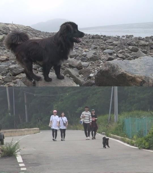 '동물농장' 밍키/사진=SBS 'TV 동물농장' 방송화면