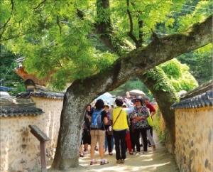 남사마을 이씨 고가에 있는 X자 회화나무