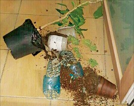 지진 발생 후 울산의 한 아파트 베란다에서 화분이 떨어져 깨져 있다. 연합뉴스