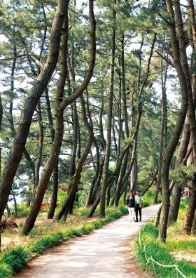 충남 서천 장항송림산림욕장