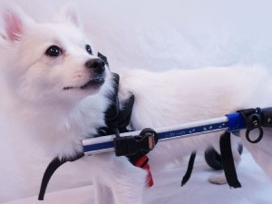 걷지도 못하는 개를 왜 키우냐고요?