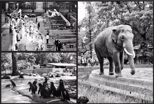 프랑스 대혁명의 산물인 파리 동물원(왼쪽위)과 전쟁의 포화 속에 잿더미가 됐던 베를린 동물원(오른쪽), 대중에게 개방된 세계 최초의 동물원인 런던동물원(왼쪽 아래). 어크로스 제공