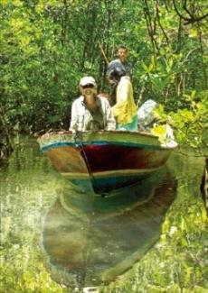 맹그로브 숲 투어를 하는 여행객들