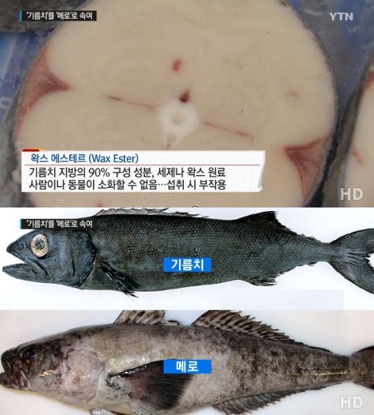 왁스 원료 기름치 / 사진 = YTN 방송 캡처