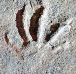 경남 남해에서 발견된 1억년 전 도마뱀 발자국 화석.