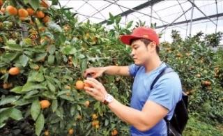 제주 최남단 가뫼몰 마을의 감귤 농장에서 각종 체험을 할 수 있는 롯데호텔제주 '팜 투어'