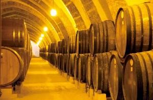 ④ 포도향으로 가득한 '플로리오'의 와인저장고.