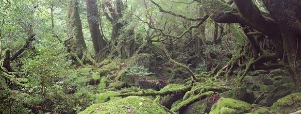<원령공주>의 배경지가 된 야쿠시마 섬의 원시림.