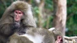 야쿠시마 섬에서 만난 원숭이.