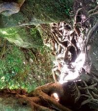 터널 나무.