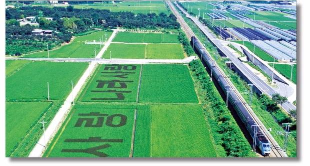 1948년 시행된 미군정의 농지개혁은 일제강점기 일본이 소유했던 남한 내 농지를 대상으로 이뤄졌다. 농지의 가격은 해당 농지에 서 생산되는 농산물 가치의 3배로 매겨졌다.
