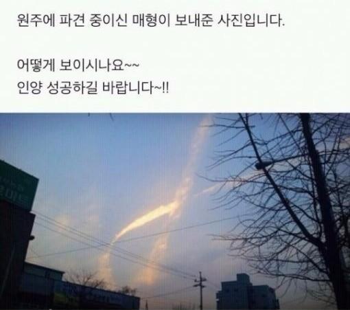 세월호 리본 사진. 온라인커뮤니티 캡처