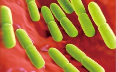 유산균에서 치료제로 변신하는 '마이크로바이옴'
