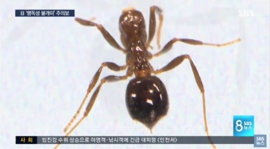 SBS 방송화면 캡처
