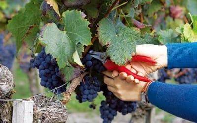 '보르도식 새참' 먹으며 나만의 와인 빚다