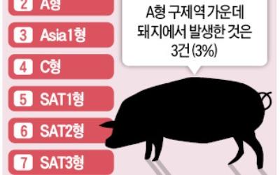 김포서 돼지 A형 구제역 첫 발생… 백신접종 전혀 안돼 방역 '비상'