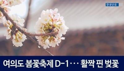 여의도 봄꽃축제 D-1 ··· 윤중로는 이미 축제 분위기