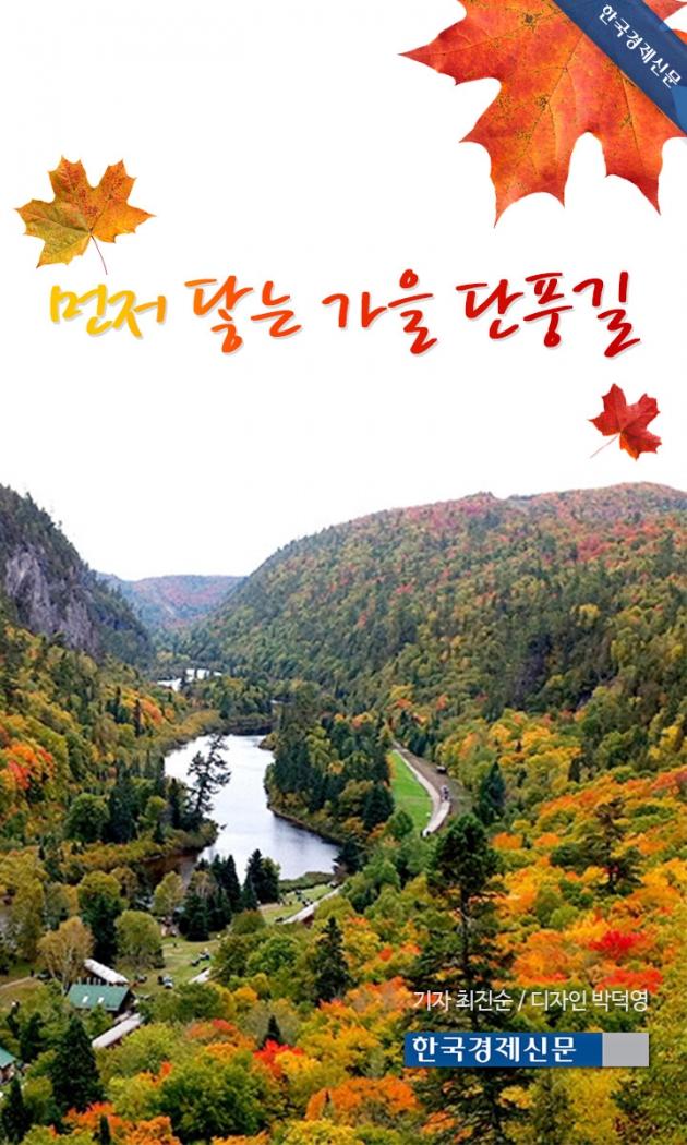 (카드뉴스) 먼저 닿는 가을 단풍길