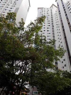 지하철 3개역 도보로 이용 … '주안더월드스테이트' 84㎡ 3.8억