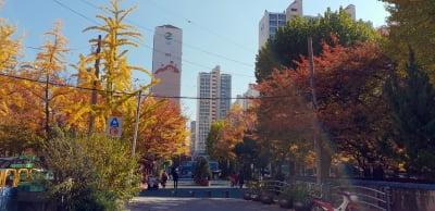 36년 된 영등포 역세권 '문래국화아파트' … 전용 84㎡ 8.3억원