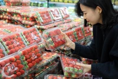 인스턴트 커피보다 많이 팔린 딸기…신품종이 매출 견인
