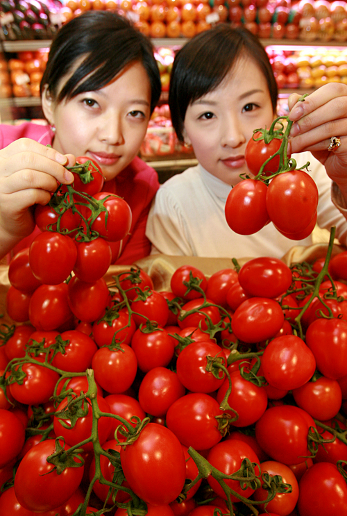 송이 토마토 맛 보세요