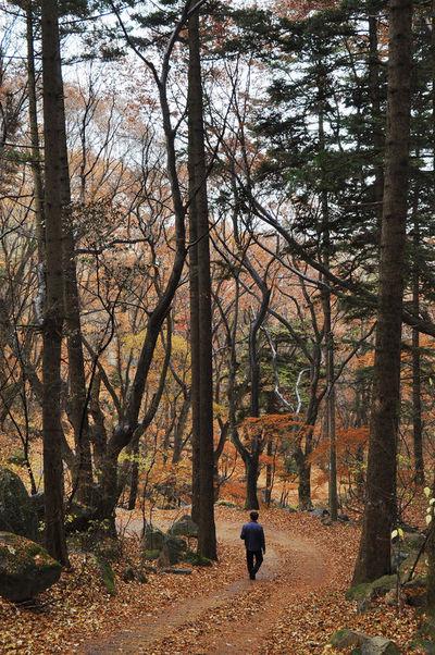 바스락 바스락 '낙엽심포니'…겨울 문턱 낭만이 뒹군다
