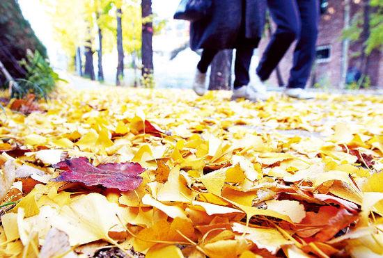 [한경 Better life] 눈 내리면 늦으리…11월은 배당주의 계절