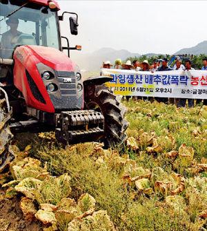 농산물 예측 '뒷북'…배추 가격 폭락에 밭 갈아엎기도…