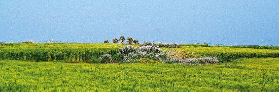 '바람이 더한다'는 뜻을 가진 가파도는 봄이면 청보리의 물결에 뒤덮인다.