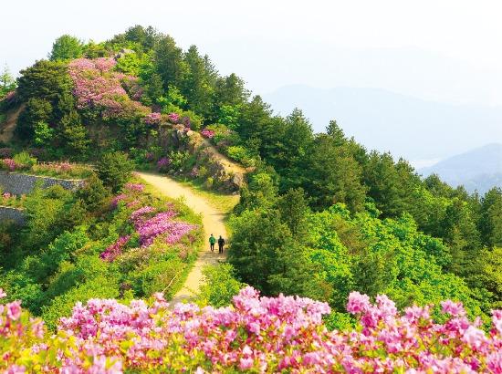 지리산 길을 따라 봄을 알리는 철쭉이 만개했다.  한국관광공사 제공