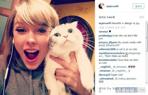 세계적인 팝스타 미국의 테일러 스위프트(Taylor Swift)가 자신의 SNS에 올린 반려묘 사진. 테일러 스위프트가 키우는 고양이 종인 '스코티시 폴드(Scottish Fold)'가 국내외에서 화제가 되기도 했다. 그는 전세계에서 가장 많은 인스타그램 팔로워수(6400만명) 보유자다.