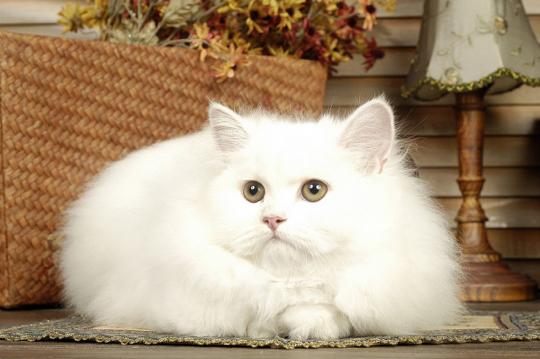 고양이의 긁기 본능 이유, 근육 단련-영역표시 등..발톱긁개 만드는 법은?