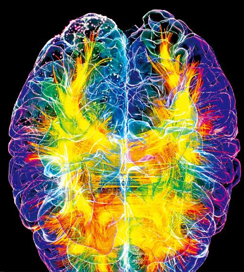 1% 밝혀진 '뇌 지도'…인공지능 신경망, 뇌기능 탐색 활용
