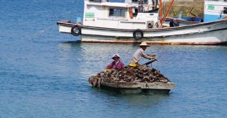 돌미역 등 해초를 채취하는 마을 사람들