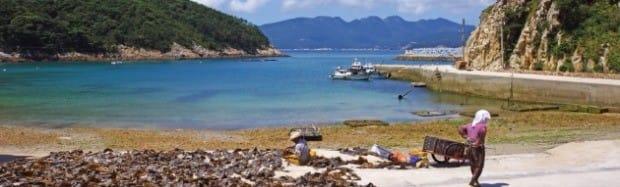 영산도 사람들은 예전에는 주로 홍어잡이를 했지만 요즘은 멸치잡이를 하거나 해초를 채취하며 살아간다.