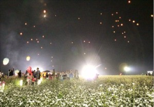 2017 평창효석문화제가 오는 10일부터 소설처럼 아름다운 메밀꽃을 주제로 봉평면 효석문화마을 일대에서 열린다.