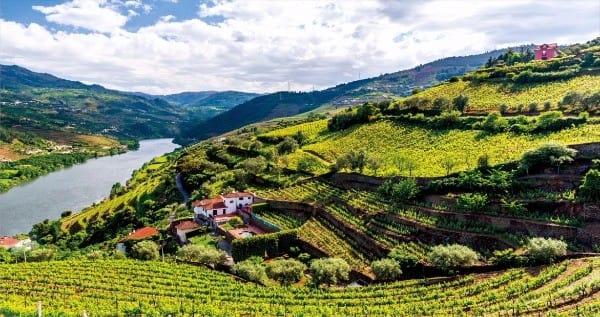 계단식 포도밭이  압도적인 풍광을 자랑하는 포르투갈 '도루 밸리'